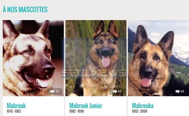 Un site dédié à la mémoire de nos animaux de compagnie