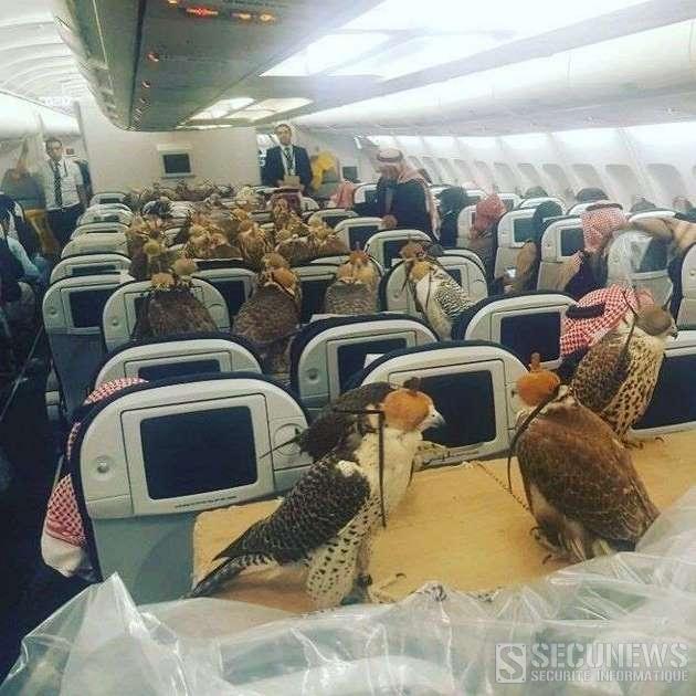 80 faucons d'un prince saoudien à bord d'un avion de ligne